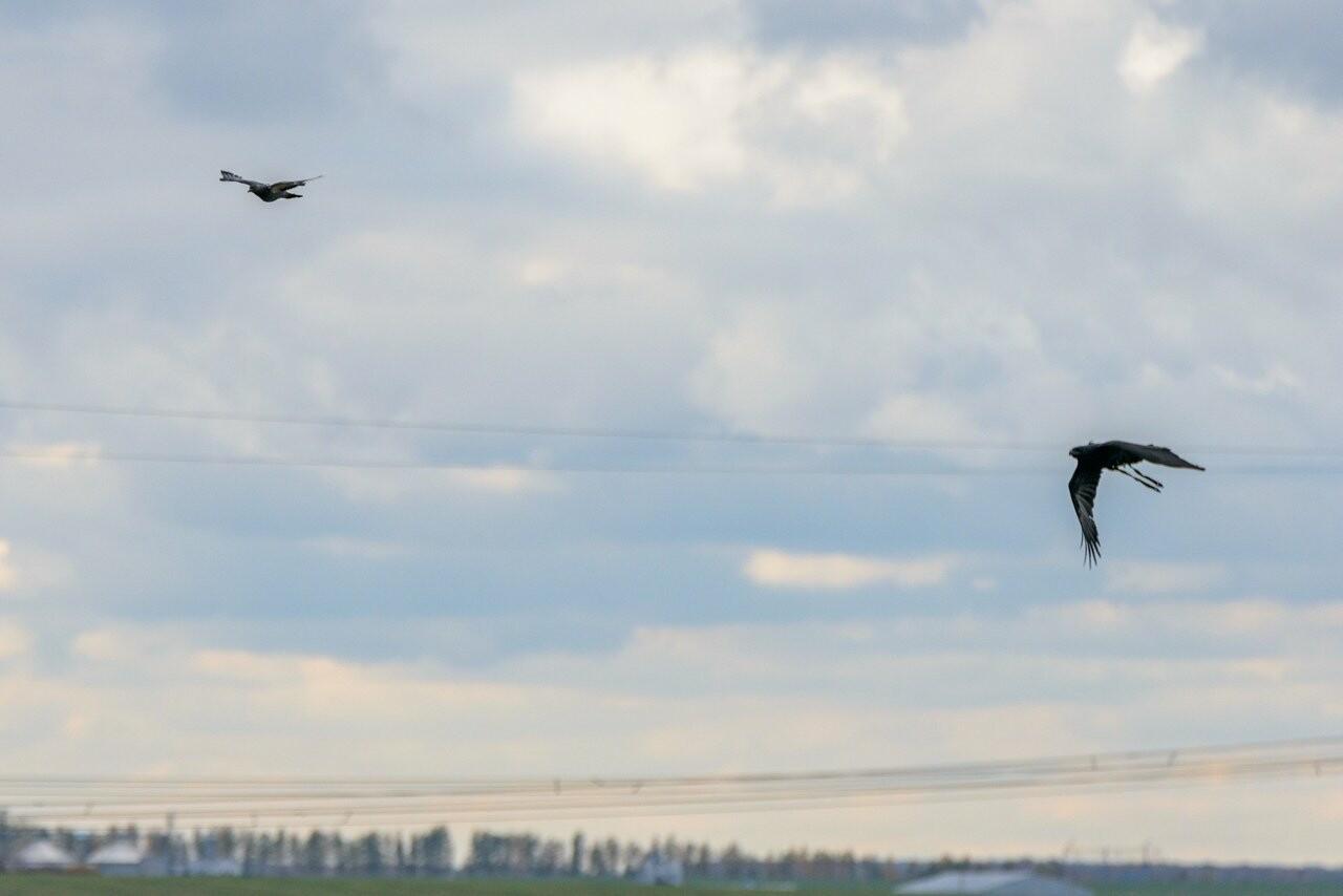 Лучше сокол в небе: мичуринский сокольник занял первое место на Всероссийских соревнованиях, фото-5