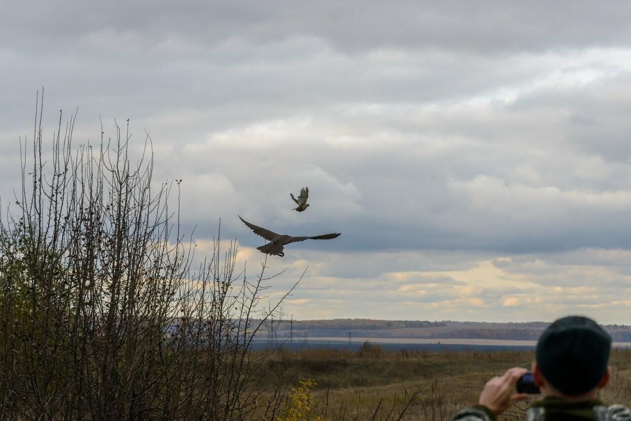 Лучше сокол в небе: мичуринский сокольник занял первое место на Всероссийских соревнованиях, фото-6