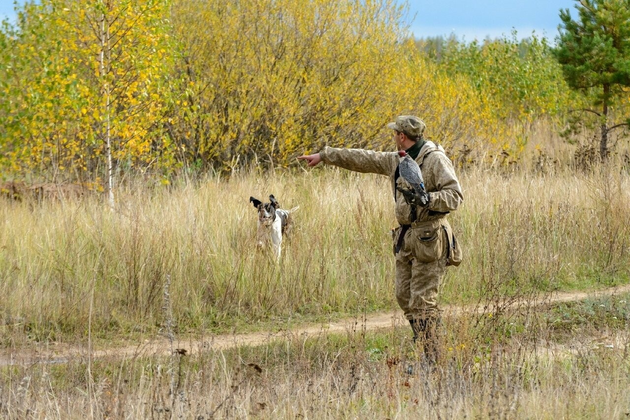 Лучше сокол в небе: мичуринский сокольник занял первое место на Всероссийских соревнованиях, фото-10