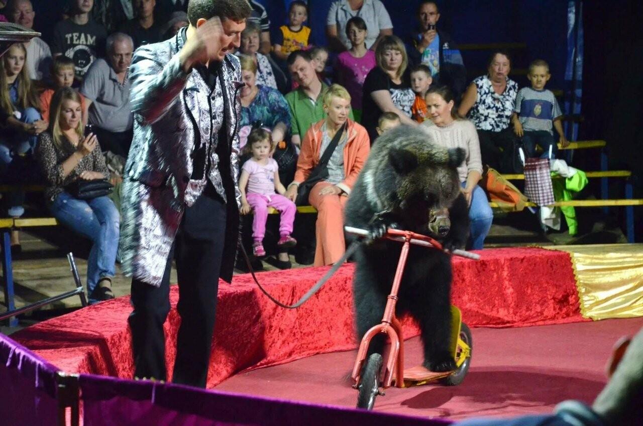 Представления цирка-шапито «Европа» проходят в Тамбове с аншлагом, фото-1