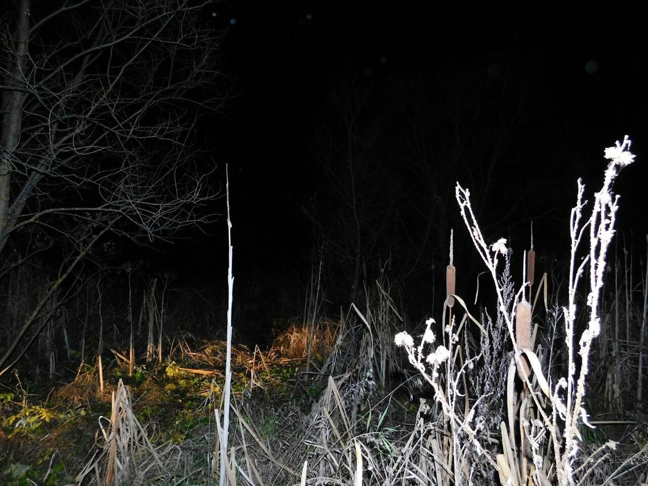 В Тамбовской области нашли тело без вести пропавшего 15-летнего подростка, фото-1