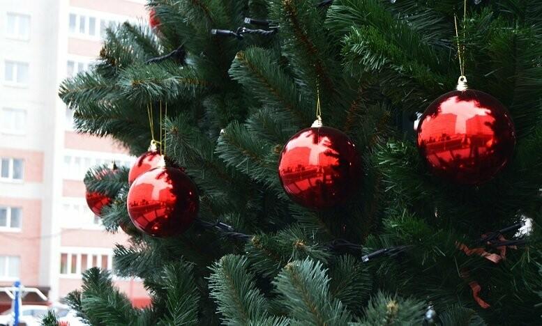Праздник к нам приходит: в Тамбове установили первую новогоднюю ёлку, фото-2