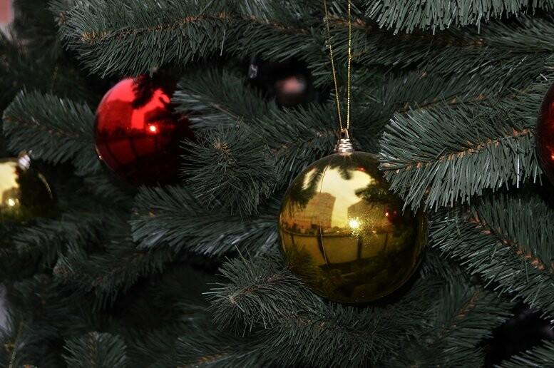 Праздник к нам приходит: в Тамбове установили первую новогоднюю ёлку, фото-3