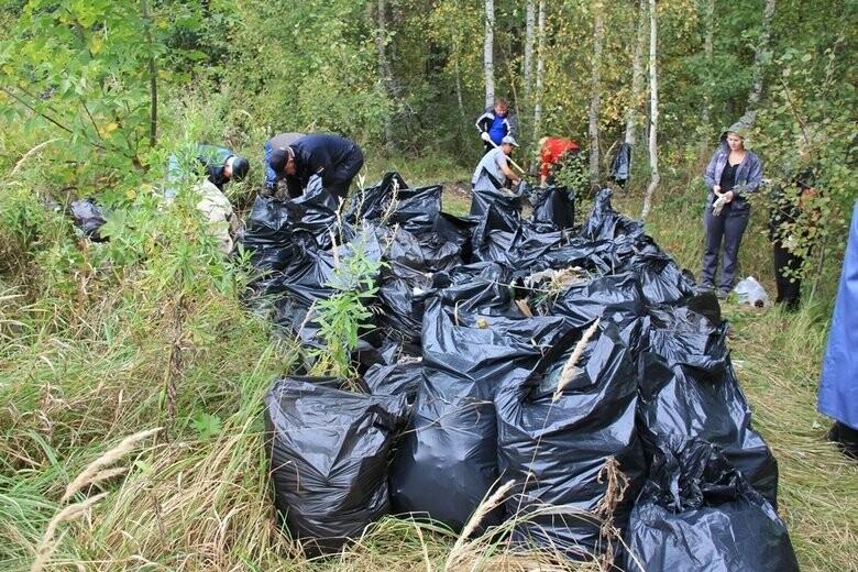 сделать рыбные фото уборки леса для