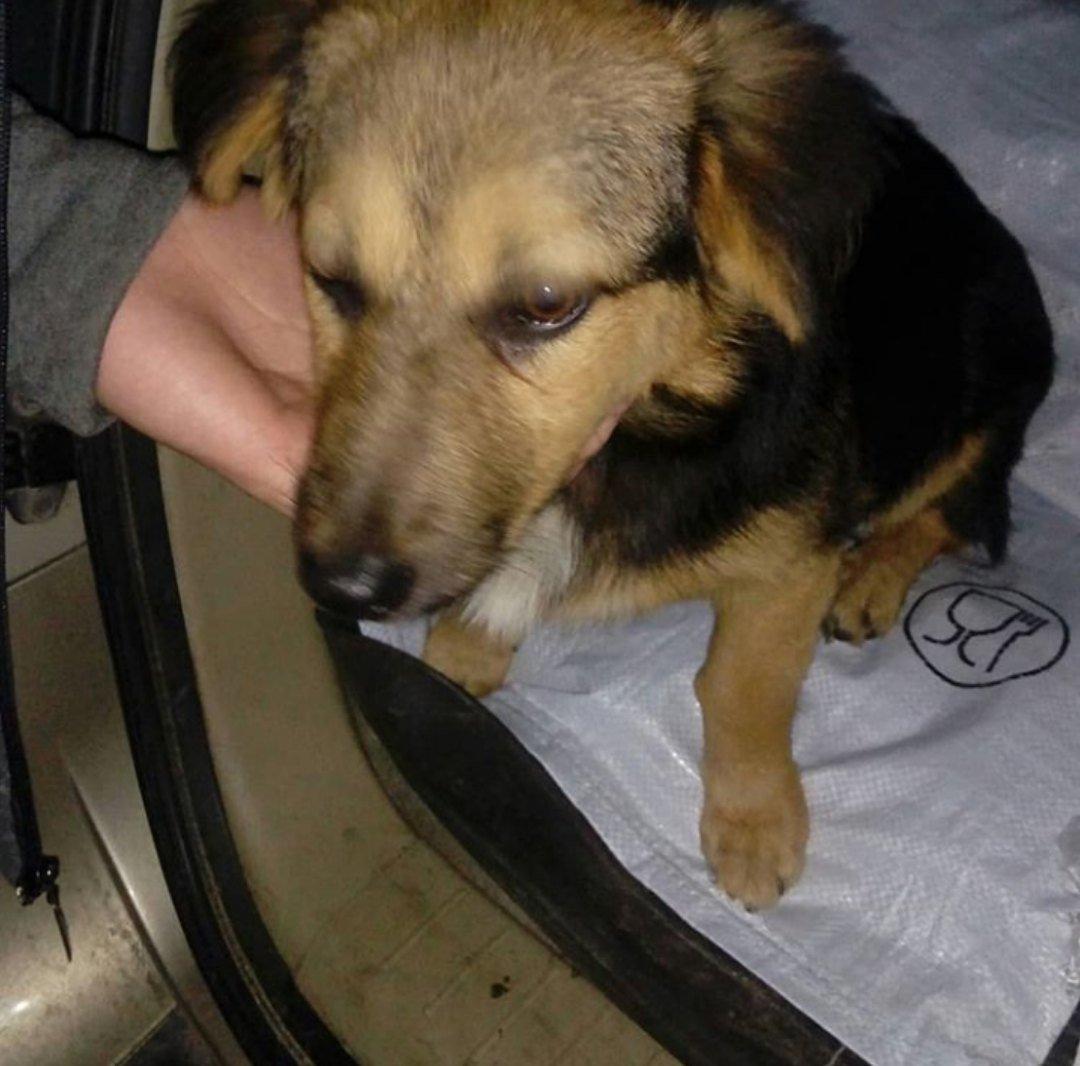 В Тамбове спасли собаку, которую хозяева повесили на дереве, фото-3