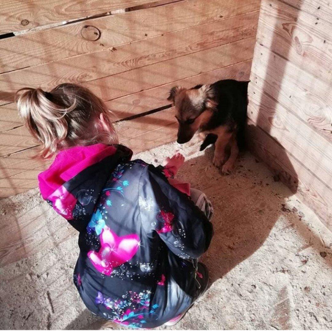 В Тамбове спасли собаку, которую хозяева повесили на дереве, фото-2