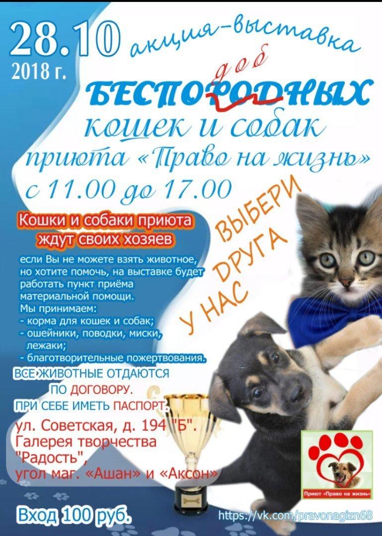 Тамбовчан ждут на выставке беспородных кошек и собак, фото-1